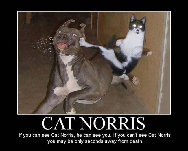 funny cat ninja